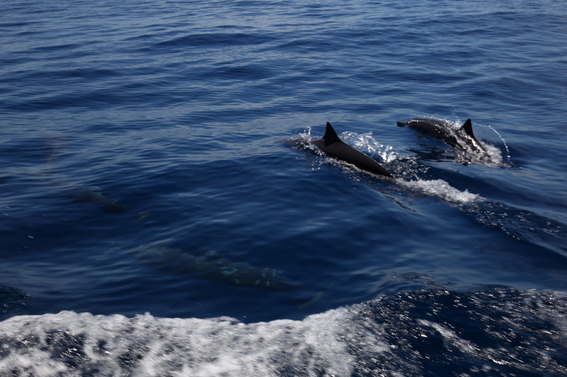 Voor het fotograferen van jagende scholen vissen, walvissen, springende zeilvissen, marlijnen of dolfijnen en dergelijke ben je dan weer aangewezen op een telezoomlens.