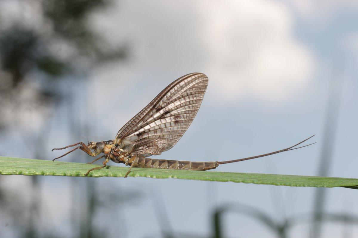 Een vleugje wind en het insect valt buiten het gebied dat scherp weergegeven wordt!